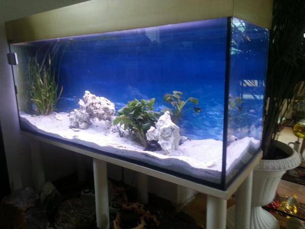 aquarium 120cm neu und gebraucht kaufen bei. Black Bedroom Furniture Sets. Home Design Ideas