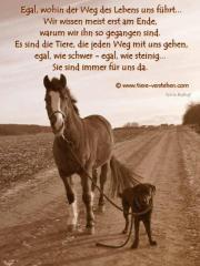 1 pferd aus