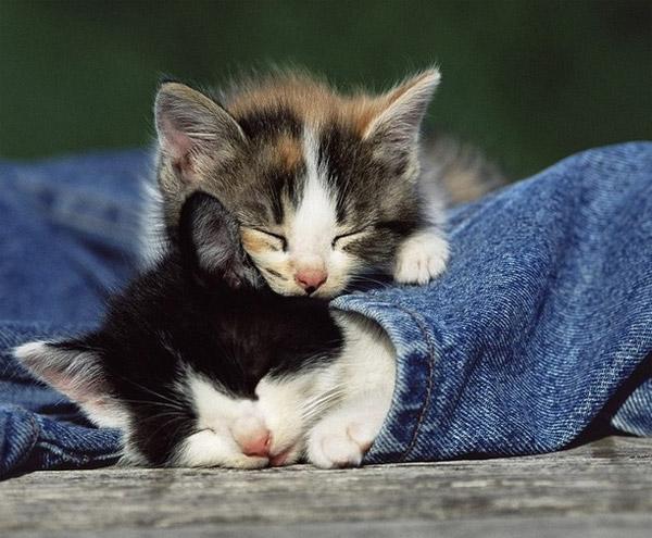 suche babykatze kostenlos