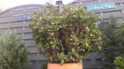 2 große Pflanzen