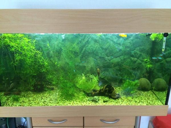 240l aquarium mit fischen zubeh r in schlitz fische. Black Bedroom Furniture Sets. Home Design Ideas