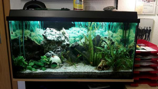 aquarium und fische in backnang kaufen bei deine. Black Bedroom Furniture Sets. Home Design Ideas