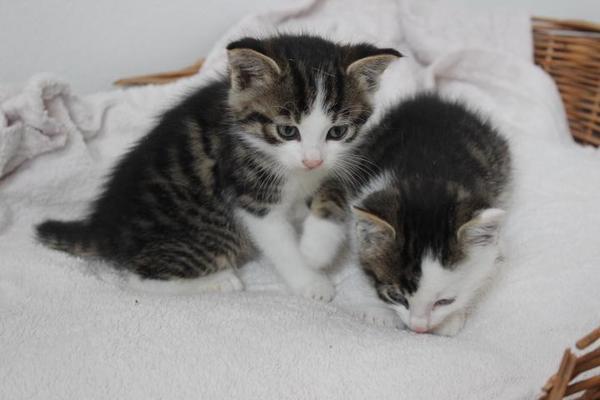 3 Katzenbabys in gute Hände abzugeben in Hettenhausen