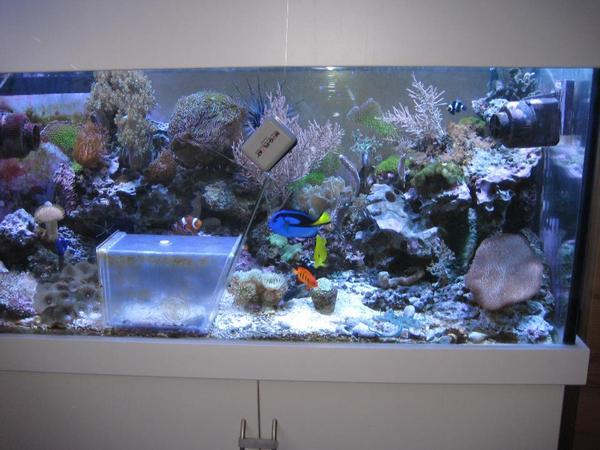 360 l salzwasser meerwasser aquarium mit technikbecken und schrank technik zubeh r in. Black Bedroom Furniture Sets. Home Design Ideas