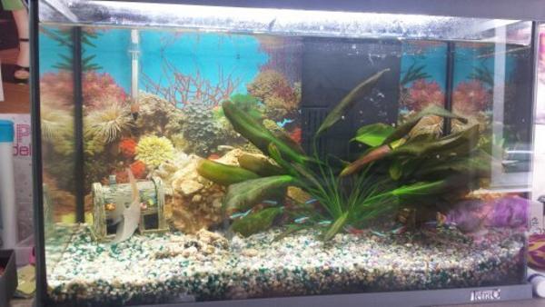 60l aquarium von tetra in pforzheim fische aquaristik. Black Bedroom Furniture Sets. Home Design Ideas