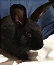 Abzugeben der Kaninchen