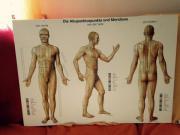 Akupunkturtafeln