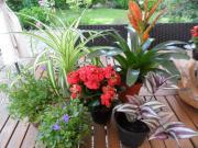 Alle 6 Pflanzen