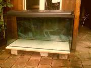Aquarium, 100 x