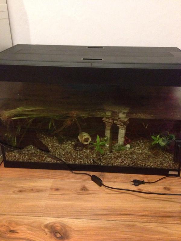 aquarium 120 liter in rohrbach fische aquaristik kaufen und verkaufen ber private kleinanzeigen. Black Bedroom Furniture Sets. Home Design Ideas