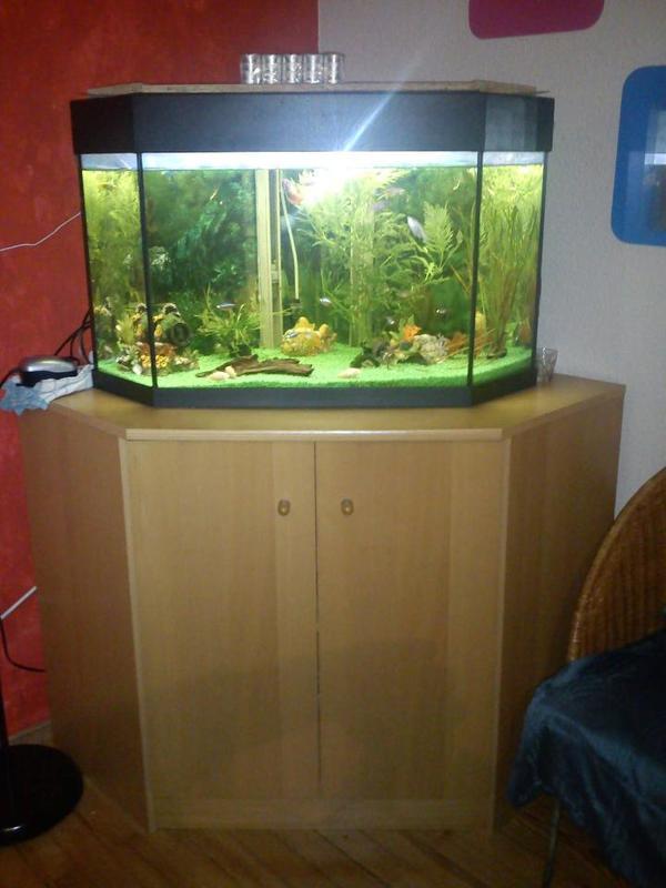 aquarium 140l gebraucht aber v llig dicht in n rnberg fische aquaristik kaufen und verkaufen. Black Bedroom Furniture Sets. Home Design Ideas
