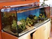 Aquarium 160x60x60 inkl.