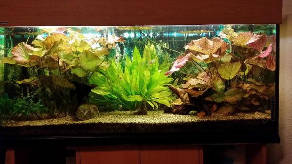 aquarium 240 liter komplett in herne fische aquaristik. Black Bedroom Furniture Sets. Home Design Ideas