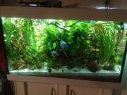 Aquarium 420 Liter