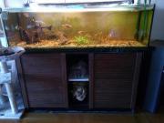 Aquarium 500l mit