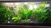 Aquarium ca 1,