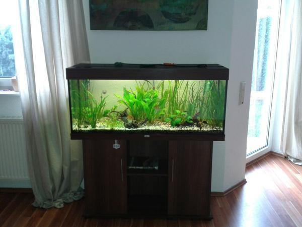 aquarium juwel 240 liter in ha loch fische aquaristik. Black Bedroom Furniture Sets. Home Design Ideas