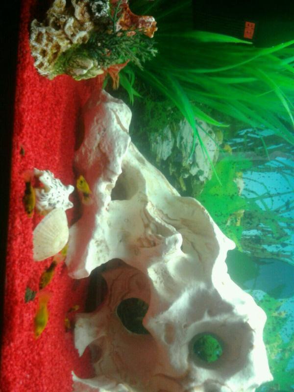 aquarium komplett in b hl fische aquaristik kaufen und. Black Bedroom Furniture Sets. Home Design Ideas