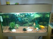 Aquarium koplett set