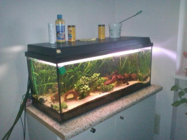 aquarium mit fischen abzugeben in coburg fische. Black Bedroom Furniture Sets. Home Design Ideas