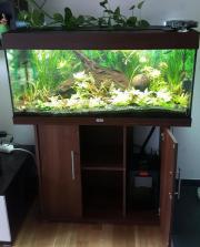 Aquarium mit Pflanzen