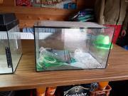 Aquarium ohne Deckel