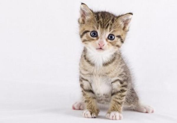 Gartenmobel Zu Verschenken In Koln : babykatze gesucht in Gerlingen  Katzen kaufen und verkaufen über