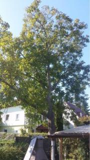 Baum zum verschenken