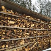 Brennholz - Kaminholz (Lauf