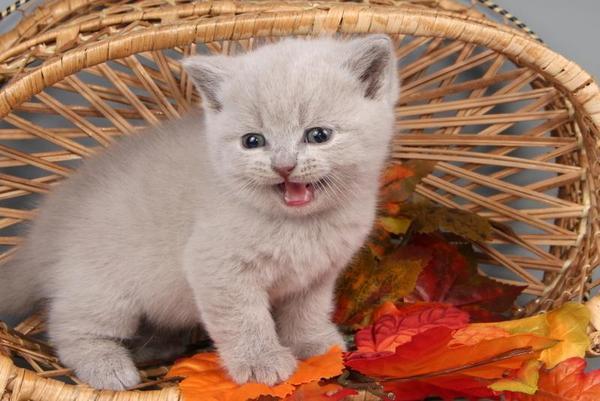 Kätzchen Englisch