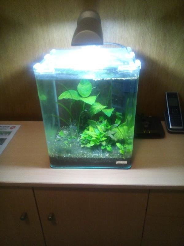 nano cube kleinanzeigen aquarium und fische deine. Black Bedroom Furniture Sets. Home Design Ideas
