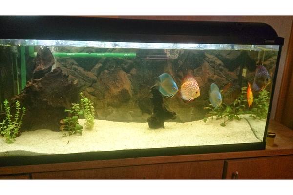 Prachtschmerlen neu und gebraucht kaufen bei for Waterhome aquarium