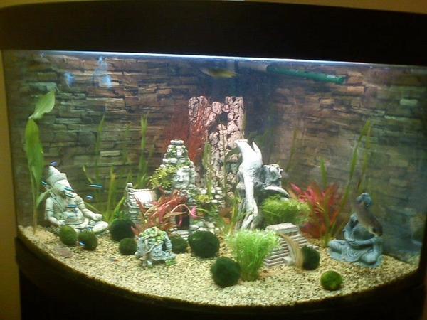 eckaquarium aquarium von juwel in bobingen fische aquaristik kaufen und verkaufen ber. Black Bedroom Furniture Sets. Home Design Ideas