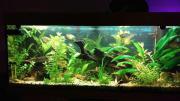 Facebook Aquarium Gruppe
