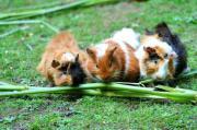 Faschingsferien /Urlaub Tierbetreuung