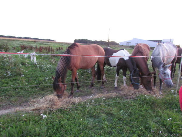 freizeitpferde zu verkaufen in vohenstrau pferde kaufen. Black Bedroom Furniture Sets. Home Design Ideas