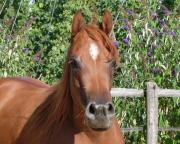 große offene Pferdebox