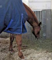 große Pferde Standraufe