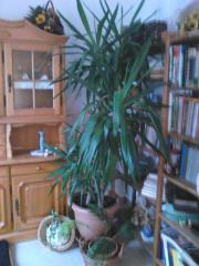 Pflanzen aus gammelsdorf - Zimmerpflanze rankend ...