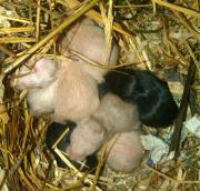 Hamsterkinder suchen ein