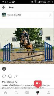 Holsteiner Springstute 8