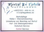 Hufpflege / Hufbearbeitung / Hufschmied /