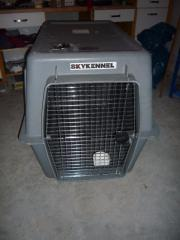 Hunde Transport Box