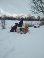 Hundebetreuung fürs Wochenende
