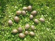 Jetzt wieder Schildkröten