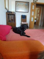 Junghündin Lola möchte