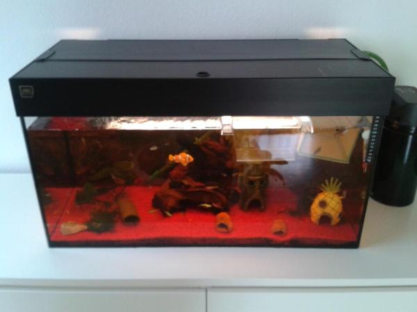 juwel aquarium 120l abzugeben in ebhausen fische. Black Bedroom Furniture Sets. Home Design Ideas
