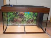 Juwel Aquarium 140
