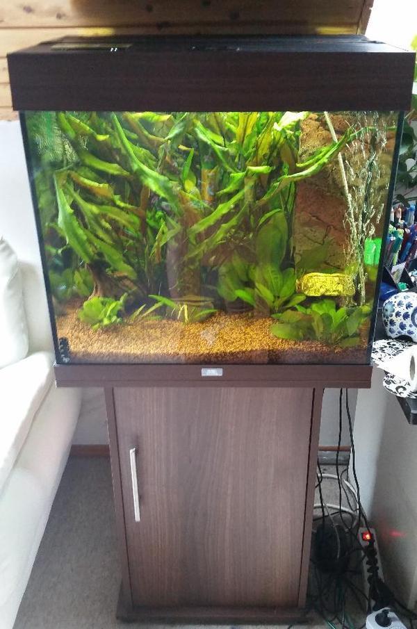 Juwel lido neu und gebraucht kaufen bei for Aquarium gebraucht