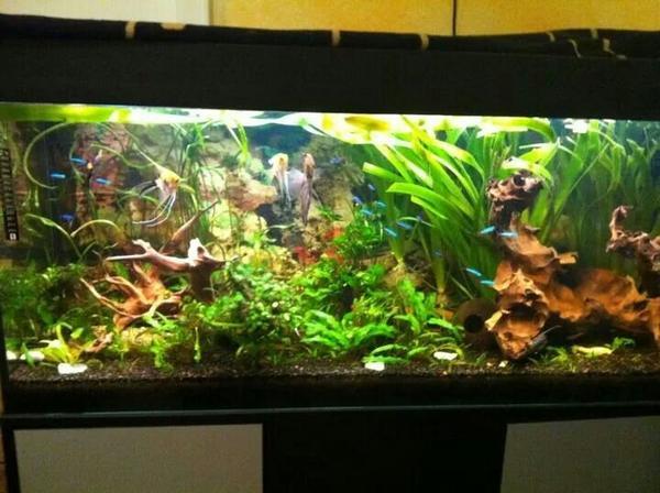 Juwel rio neu und gebraucht kaufen bei for Aquarium 120x40x50